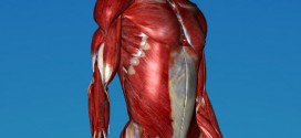 3D anatomy visualization for CoRe energy medicine