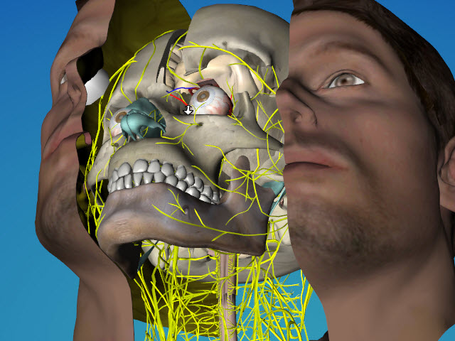 3D eye radionic evaluation and therapy 3